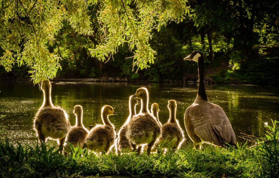 (Re)découvrez la nature en famille!